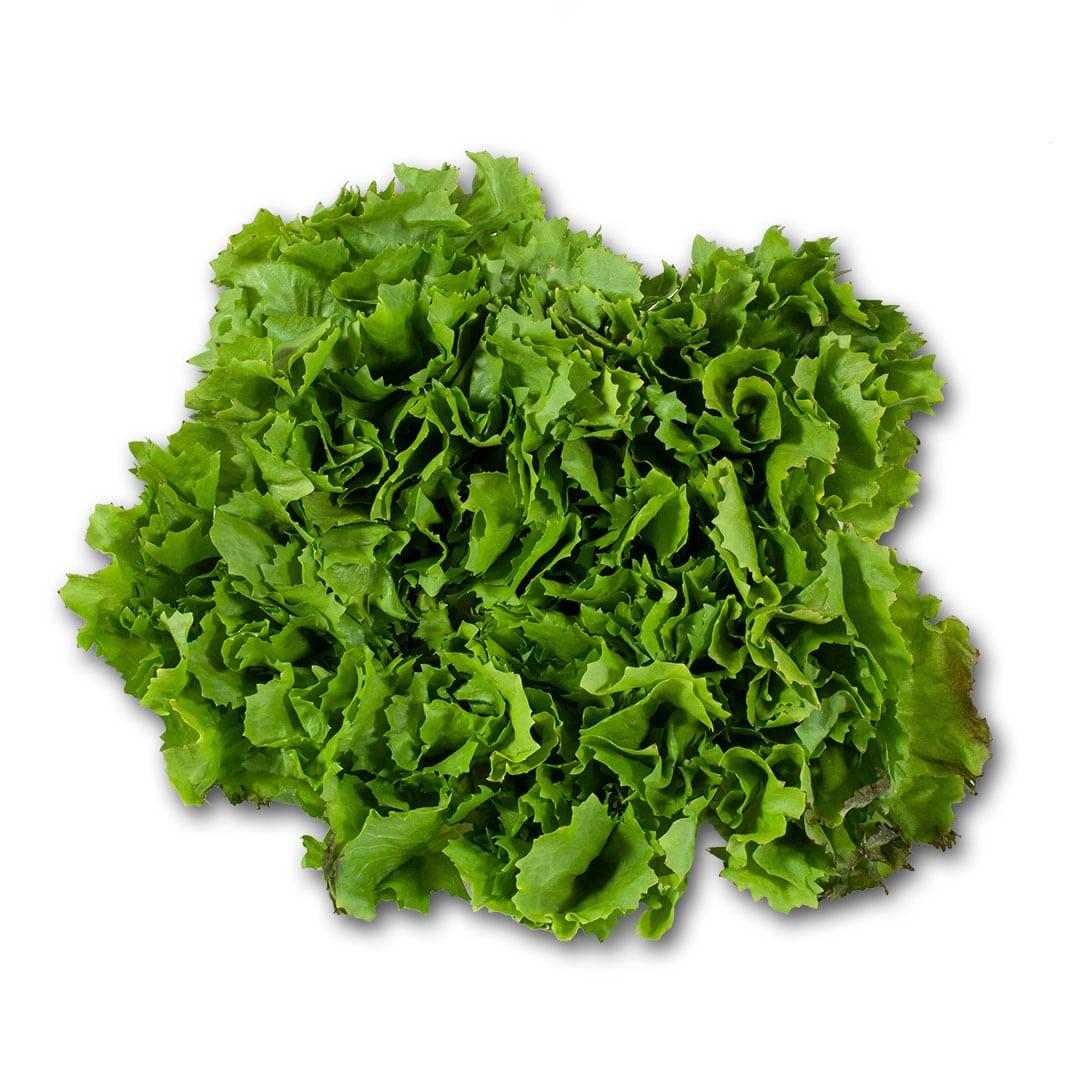 batavia verde