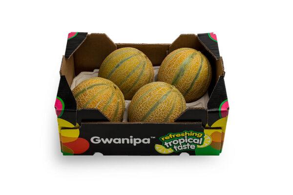 caha-gwanipa-3-1